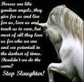 Stop Horses From Being Taken To The Slaughter House