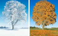 Winter and Autumn