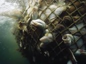 About 32% of world fish stocks are estimated to be over-exploited or depleted.