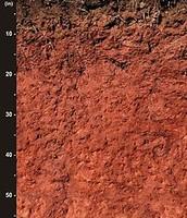 Cecil soil (found in North Carolina)