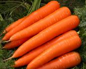 los zanahorias