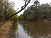 About The Piney woods Ecoregion
