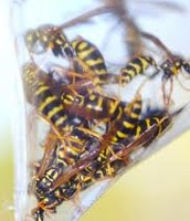Bag of wasps