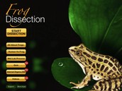 Frog-disection
