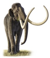 Colombian Mammoth