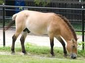 Meet our Horse!