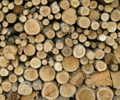 Wood stacked (for all colonies)