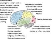 Brain Properties