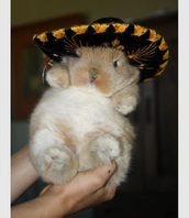 Sombrero Bunny