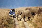 Adventure tour guide