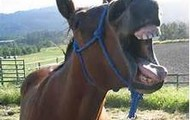 Horses Being Funny