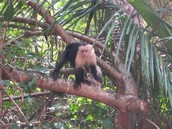 A monkey in costa rica!