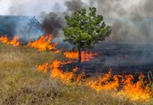 Wildfires can occur near water
