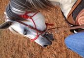 Sunnye's stables