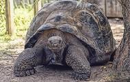 La Tortuga de los Galápagos