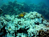 Coral reefs are every where throughout the ocean