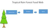Tropical Rain Forest Food Web