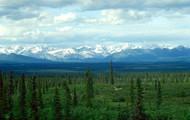 White Spruce Taiga