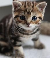 The Sad Kitty