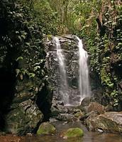 Las cascadas de  la selva
