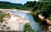 La selva Tucumana - Oranense