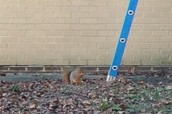 Squirrel takes the bait!!!! Will he get out?
