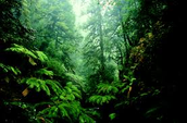 Kinds of Rainforests and Location
