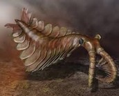 Major geologic events of the Cambrian period.