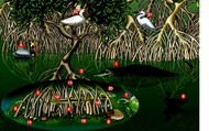 Mangrove swamp life