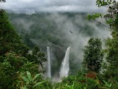 Overview of Amazon Rainforest at a different angle