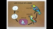 Picture of a Birds Life Cycle