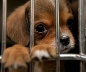 Способы регулирования численности бездомных животных