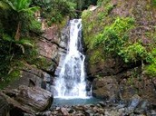 Waterfall in the El Yunque Rainforest