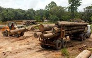 A picture of loggers taking logs to a company