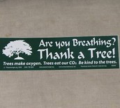 Be Kind to Trees!