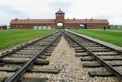 Purpose Of Birkenau