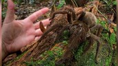 Amazon rainforest Spider