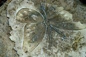 See our town fossil
