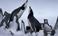 Penguin Corner