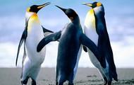 Josh the penguin