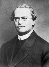 Who is Gregor Mendel?