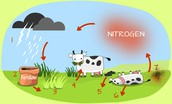 illustration of nitrogen cycle