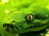 Sean the Snake