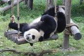 Shanghai Zoo