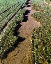 How Has Soil Been Misused?