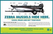 where zebera mussels hide