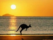 Canguro / Kangaroo