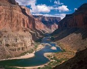Rivers located in the Grand Canyon help wildlife
