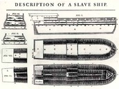 Slave Ships/ How they were packed