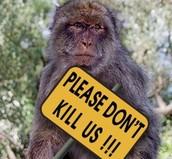 killing of animals